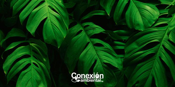 Consultoría Ambiental en Medellín